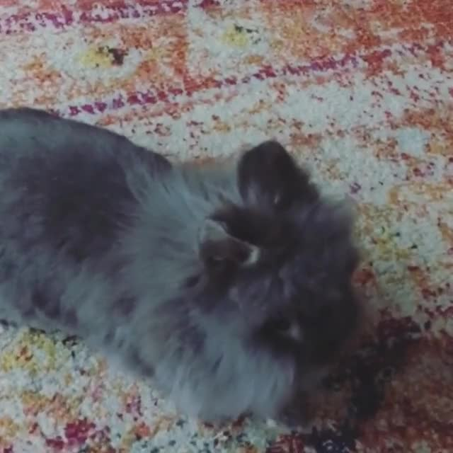 Watch and share Citybunny GIFs and Inmyspace GIFs on Gfycat