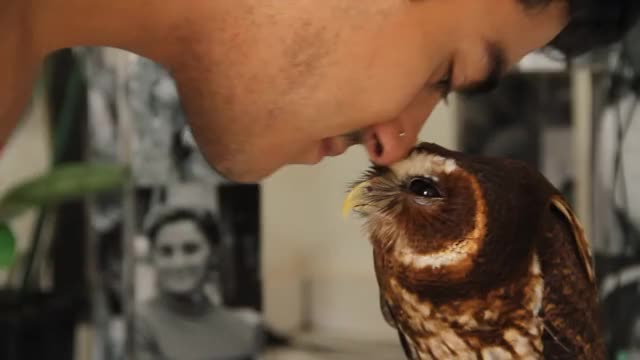 Watch Mottled Owl GIF by @xelin1 on Gfycat. Discover more related GIFs on Gfycat
