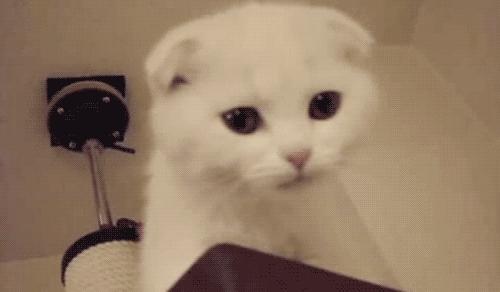 cat, cute, cute cat, kitten, kitty, meow, miauw, miow, mur, rawr, say miau, Miauw GIFs