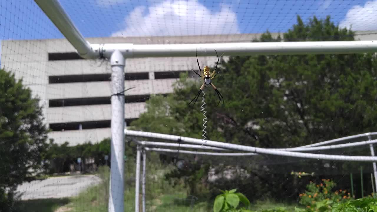 feeding my garden spiderbro GIFs
