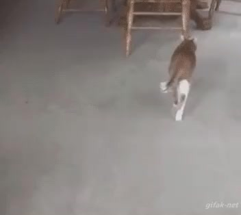 Watch Hit and Run. Voat Rocks! GIF on Gfycat. Discover more funny, gifs2 #dog, voat GIFs on Gfycat