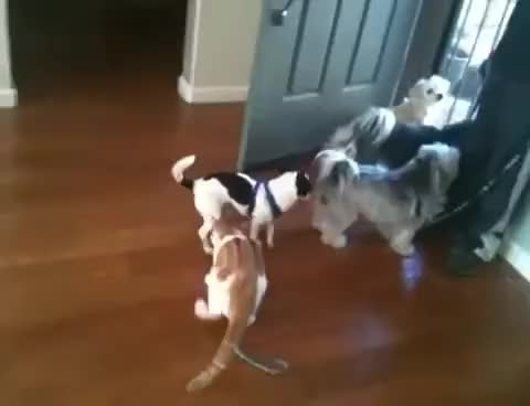 Watch and share Cat Drags Dog GIFs on Gfycat