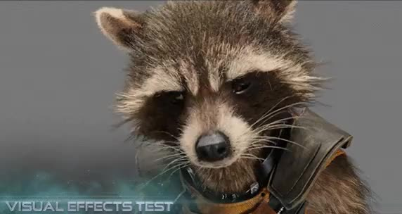 Watch Rocket Raccoon. Marksman. GIF on Gfycat. Discover more related GIFs on Gfycat