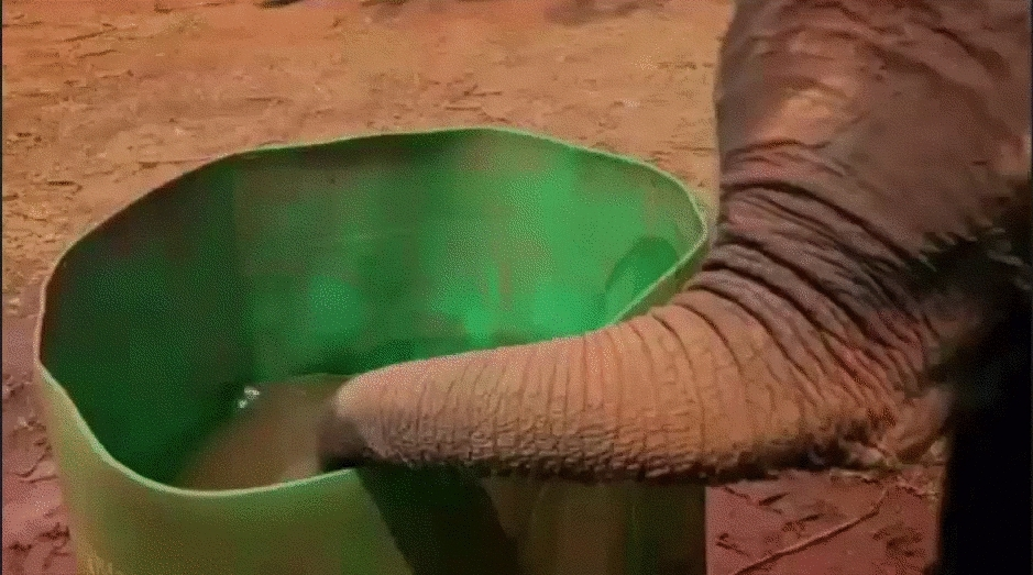 babyelephantgifs, boop, Please, let me help you clean your camera lens (reddit) GIFs