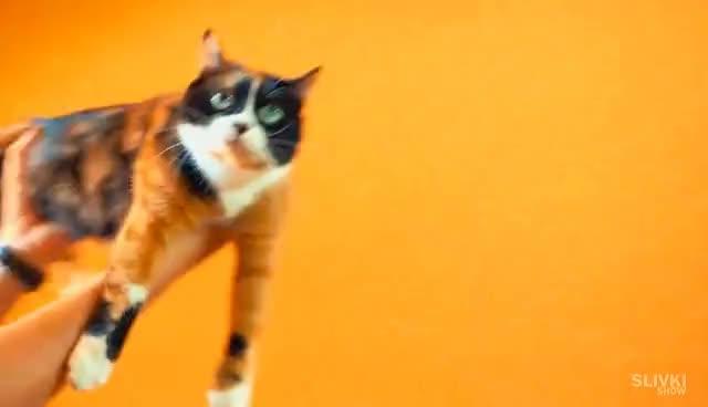 8 Simple LifeHacks for Cats! GIFs