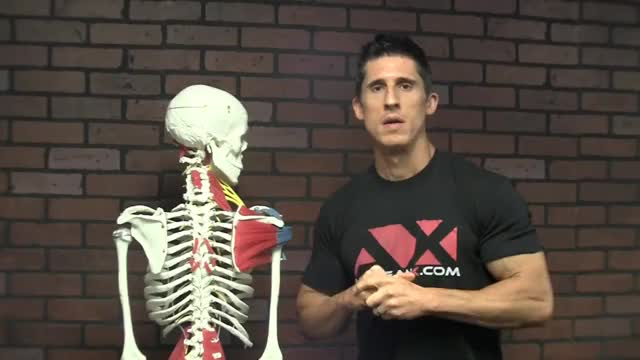 Watch and share Treat Rotator Cuff GIFs and Fix Shoulder Pain GIFs on Gfycat