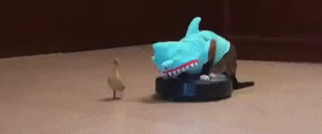 Tsundere Sharks! The second snoot boopening! Notice me  senpai! GIFs