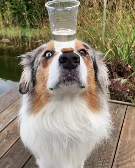 Watch and share You Firsty Boss, I Bring Drink To You GIFs by hellsjuggernaut on Gfycat