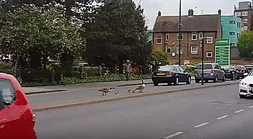 Watch and share Ducks GIFs by sinfonia on Gfycat