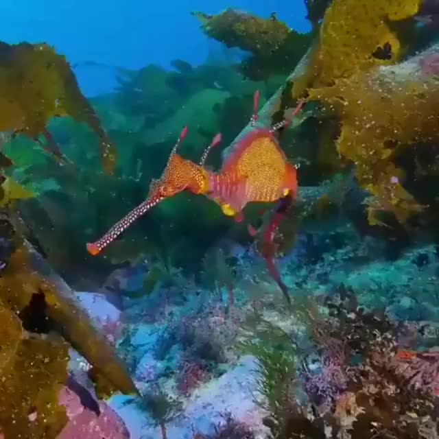 Watch and share 🔥 The Leafy Sea Dragon 🔥 GIFs by MyNameGifOreilly on Gfycat
