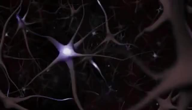 Watch and share Neuron GIFs on Gfycat