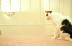 startledcats,  GIFs