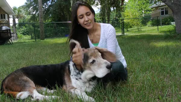 Watch and share Floppy Basset GIFs on Gfycat