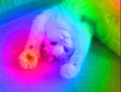 Watch recentcat GIF on Gfycat. Discover more gif_to_gyf GIFs on Gfycat