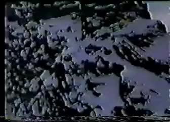 Watch Shark! GIF on Gfycat. Discover more immortal call wintermoon black metal shark GIFs on Gfycat