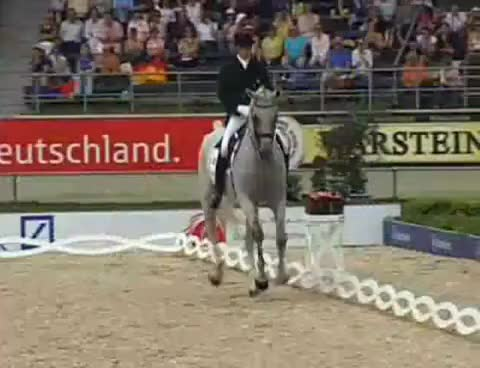 Watch and share Dressage GIFs and Horse GIFs on Gfycat
