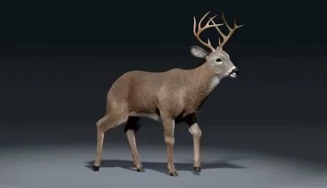 Watch and share Deer Walk Cycle Animation GIFs on Gfycat