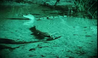Watch and share Giant Anaconda Attacks And Swallows Crocodile GIFs on Gfycat