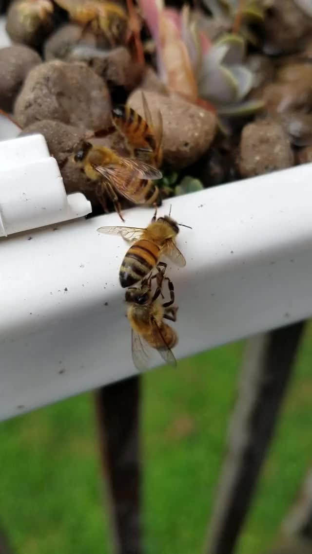 Watch and share Bee Leg GIFs on Gfycat
