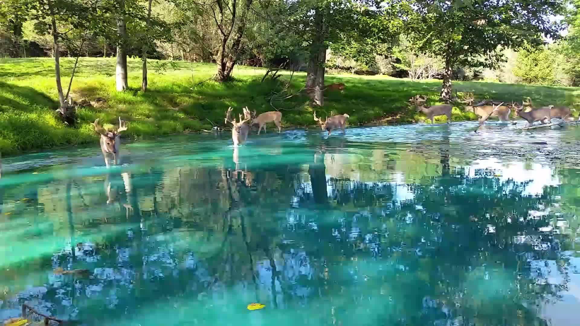 Monster bucks in blue water GIFs