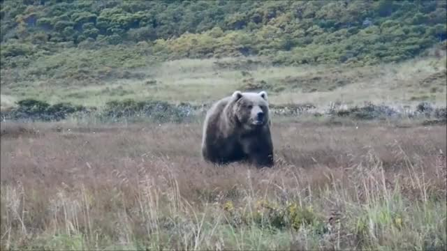 Watch bear unit GIF by @kaokao on Gfycat. Discover more related GIFs on Gfycat