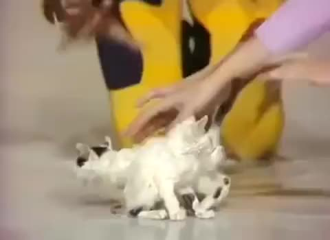 Watch The Kitty Cat Dance Concept. 70's ofc. follow @concepttalk and @neontalk GIF on Gfycat. Discover more Concept Talk GIFs on Gfycat