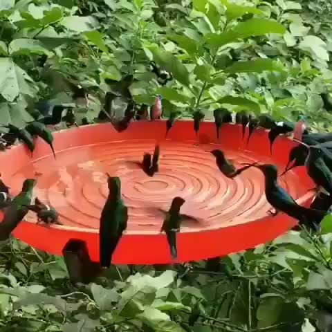 Watch Hummingbird utopia GIF by tothetenthpower (@tothetenthpower) on Gfycat. Discover more nature GIFs on Gfycat
