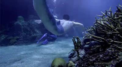 Watch Merman GIF on Gfycat. Discover more Cam, Erik, Evie, Mako, Mako Island of Secrets, Mako Mermaids, Mermaids, S2, Zac, makomermaidsh2o, merman, underwater GIFs on Gfycat