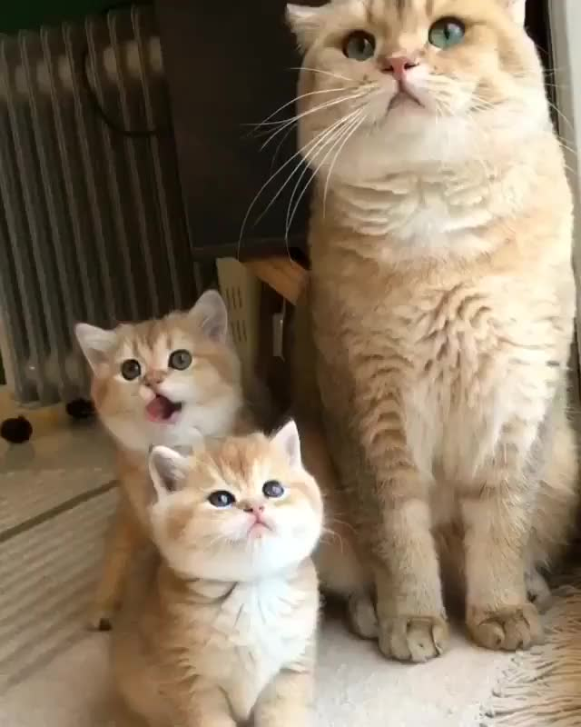 Watch and share Beautiful Family GIFs by Nomorefoxgiven on Gfycat