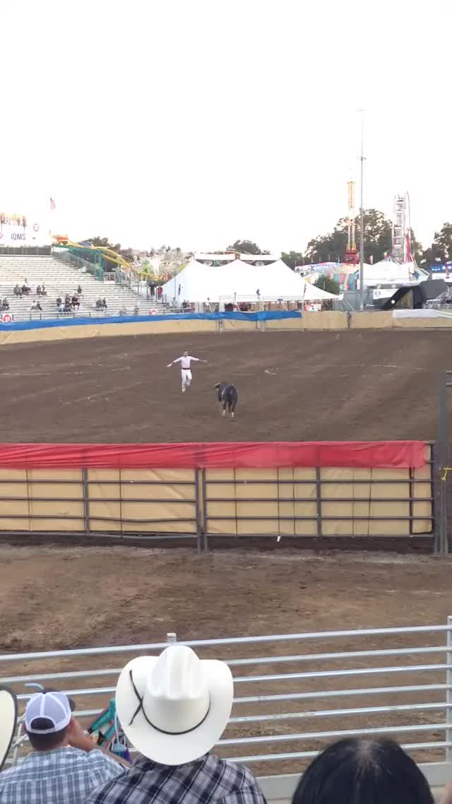 Watch Amazing Spanish bull jumpers GIF on Gfycat. Discover more related GIFs on Gfycat