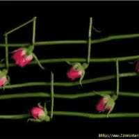Watch 🎵 musical note  🎶 musical notes GIF on Gfycat. Discover more related GIFs on Gfycat