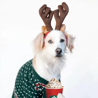 Watch and share Reindeer, Dog, Animals, Cheers, Starbucks GIFs on Gfycat