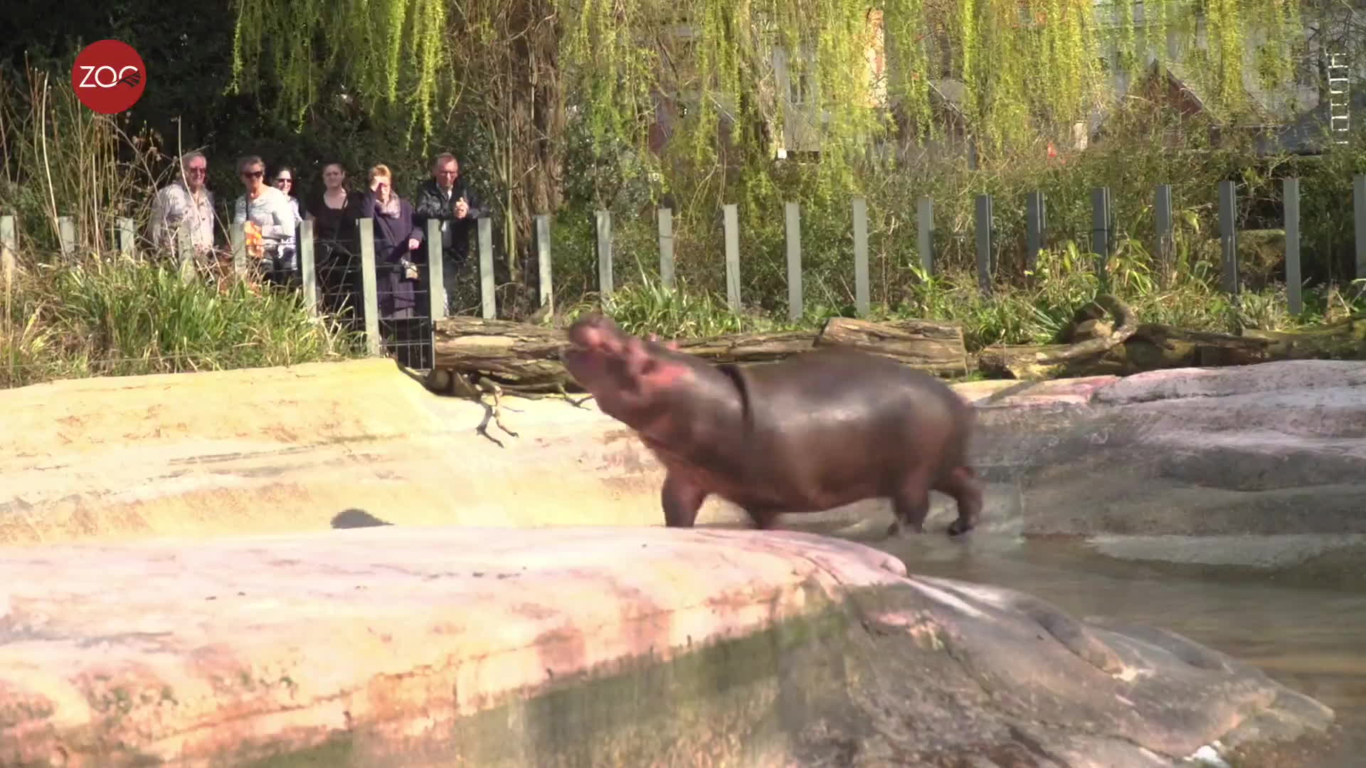 antwerp zoo, nijlpaard, zoo antwerpen, on my way! GIFs