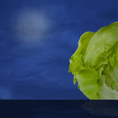 Watch and share Iceberg GIFs and Lettuce GIFs on Gfycat