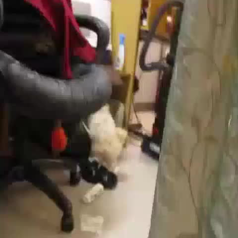 eating, hitmanimals, paper, Puppy caught eating paper decides killing witness is the only way out GIFs