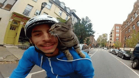 GOPRO Cat GIFs