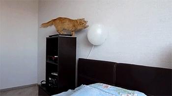 startledcats, Oh look! A balloon! (reddit) GIFs