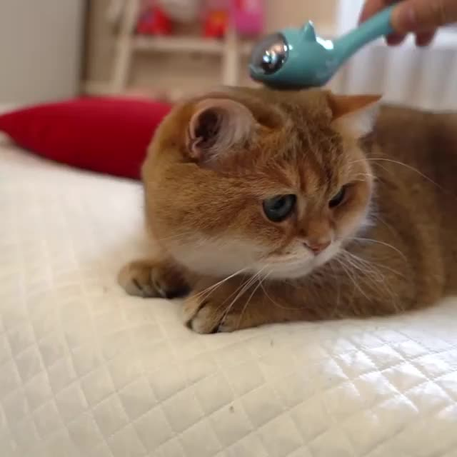Watch and share Hosico Cat GIFs by vani  on Gfycat