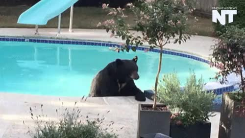 Watch and share Animals In The Pool GIFs and Caught On Camera GIFs on Gfycat