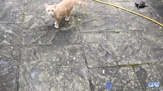 Watch and share Cats GIFs on Gfycat