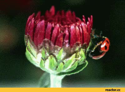 Watch ladybug GIF on Gfycat. Discover more related GIFs on Gfycat