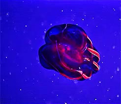 Watch and share Jellyfish GIFs and Animals GIFs on Gfycat