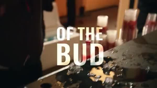 Watch and share Bud GIFs on Gfycat