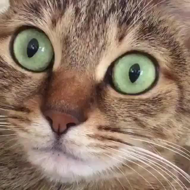 Watch and share Cuteness GIFs and Animals GIFs by Unicornglitteryblood  on Gfycat