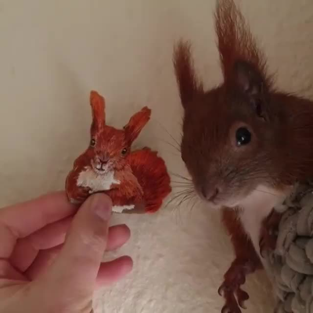 Watch this animal GIF by tothetenthpower (@tothetenthpower) on Gfycat. Discover more animal, animals, squirrel, squirrels GIFs on Gfycat