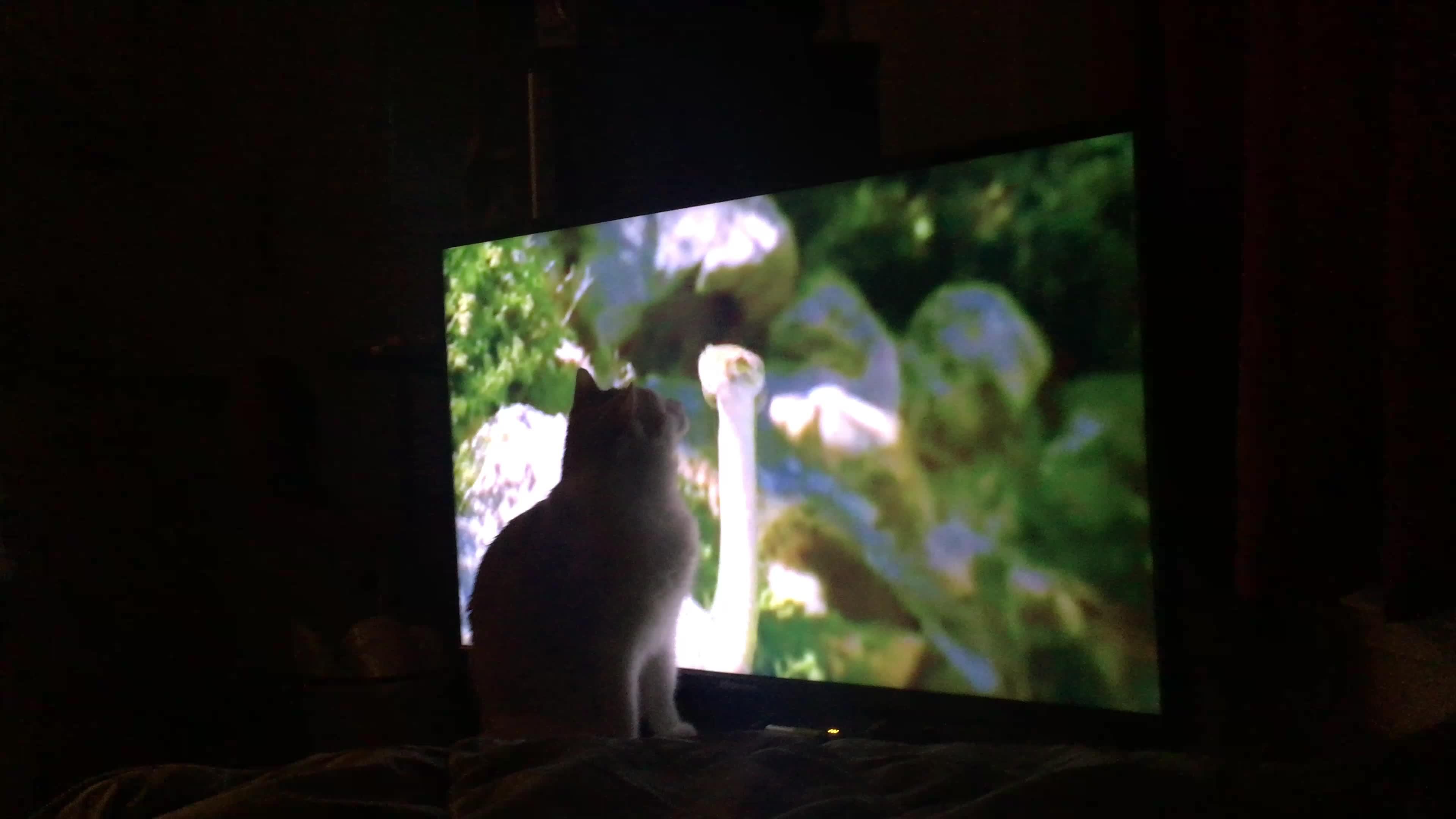 cat, snek, SnekWatch GIFs