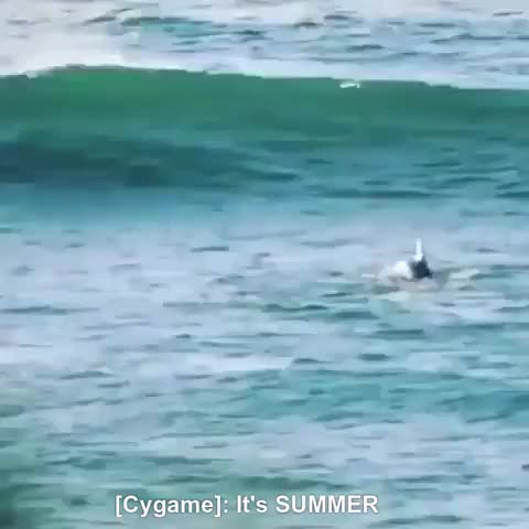 Watch and share Dolphins GIFs and Shoobies GIFs on Gfycat