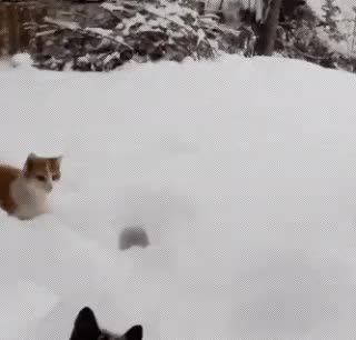 Watch and share Cat Jumping Into Deep Snow (reddit) GIFs on Gfycat