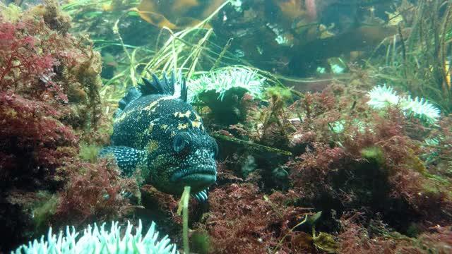 Watch and share Aquarium Fish Animation GIFs on Gfycat