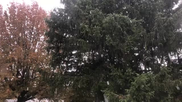 Watch snow GIF on Gfycat. Discover more related GIFs on Gfycat